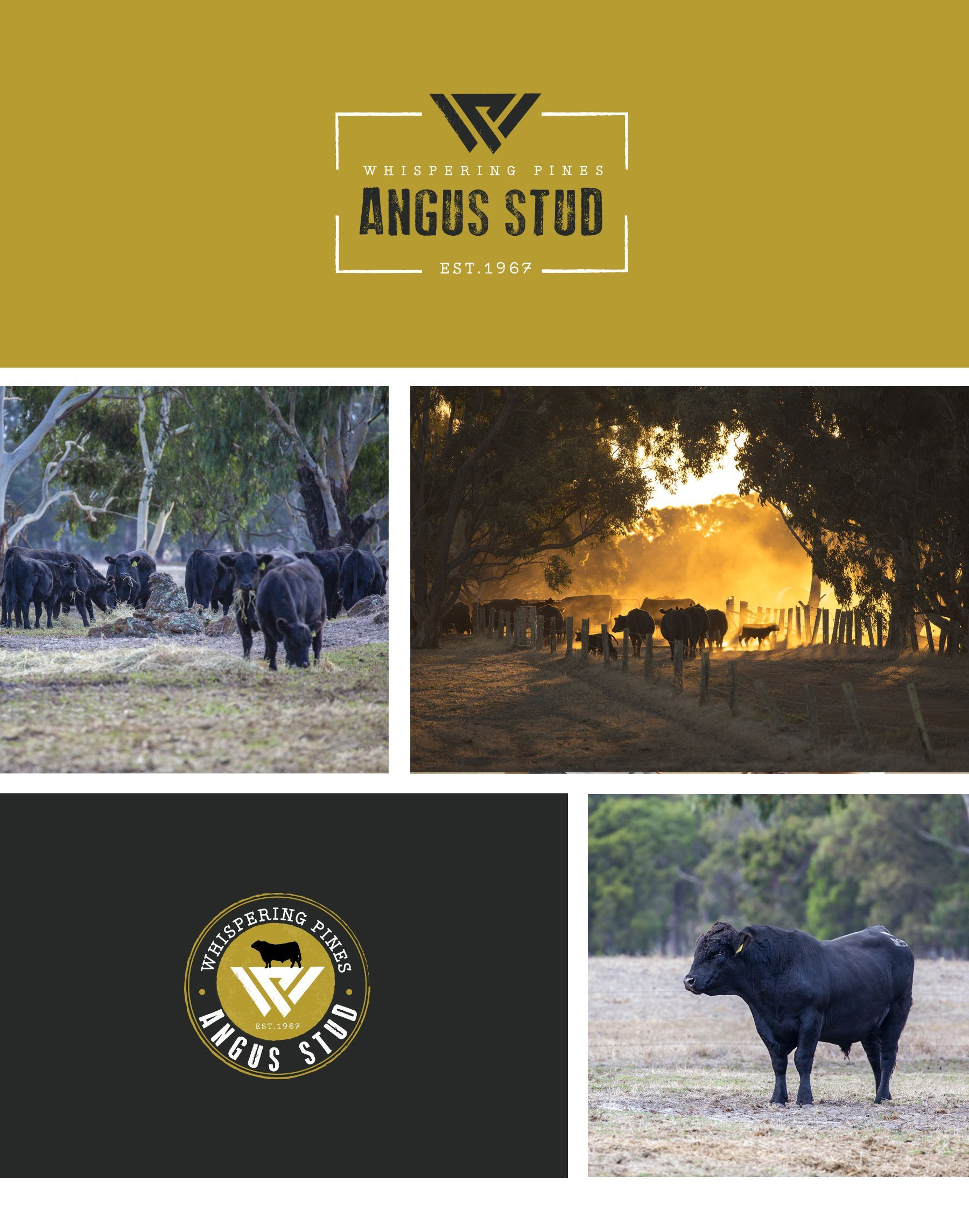 New Whispering Pines Angus Stud Busselton